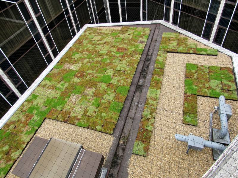 an M-Tray®  Green Roof reaching the parts other green roofs cannot reach