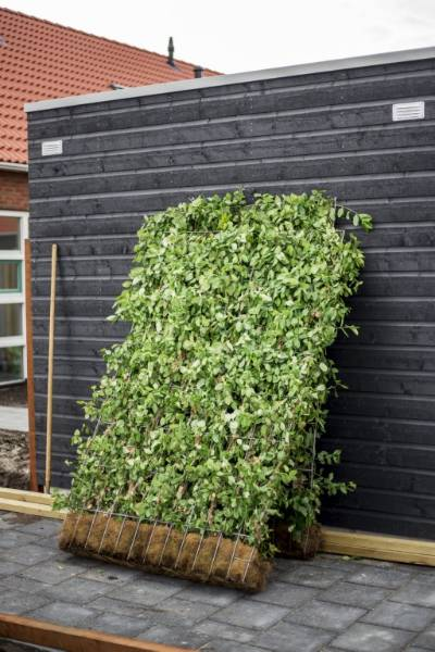 Green Screen Living Wall
