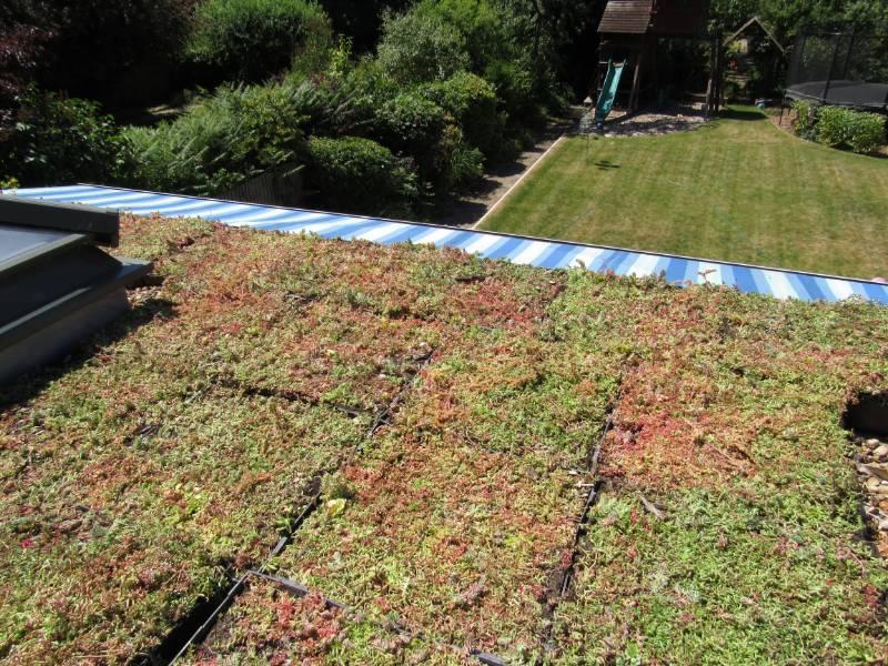Domestic retro-fit green roof - Sydenham