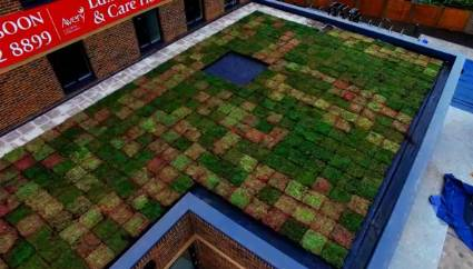 Instant Green Roof - Wimbledon - Care Home - M-Tray®