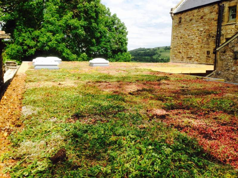Sedum Green Roof Case Study