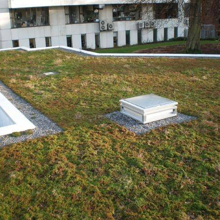 Diadem Extensive Green Roof System On Concrete Deck