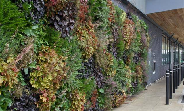 LivePanel® Living wall (External)