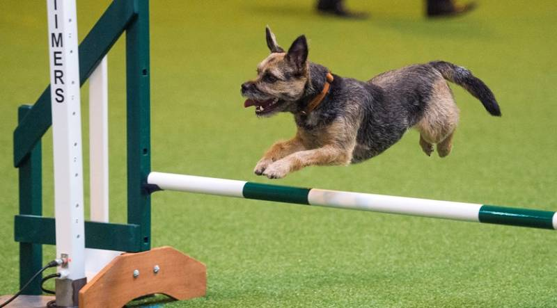 CRUFTS - Artificial Grass