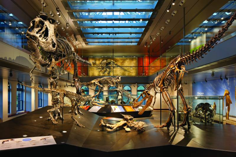 Dinosaur Hall at the Natural History Museum - Designing AV Technology to Showcase the Prehistoric Past