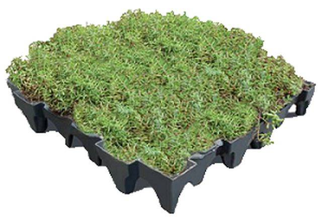 ANS GrufeKit Green Roof System – Sedum