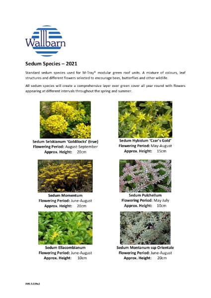 Sedum plants species list