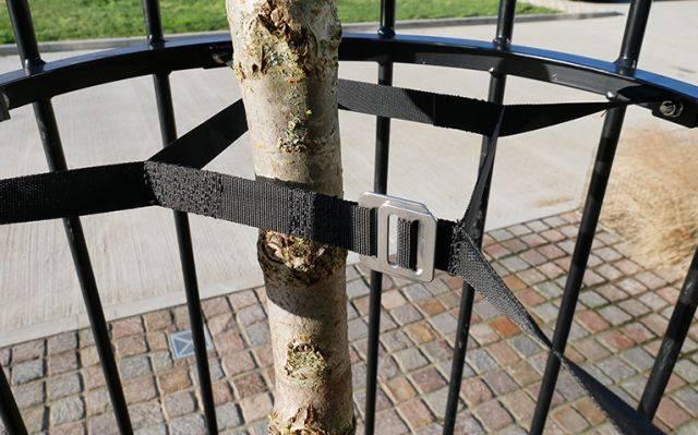 Tree Guard Tie