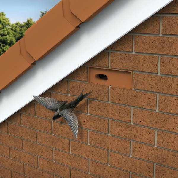 New homes for swifts – the Manthorpe Swift Brick