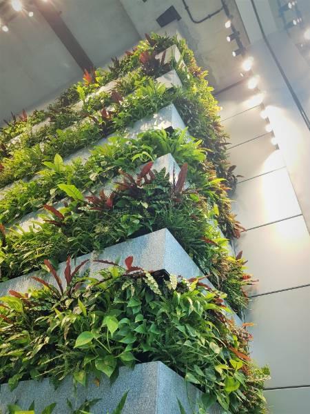 Bespoke Living Wall at for ITN