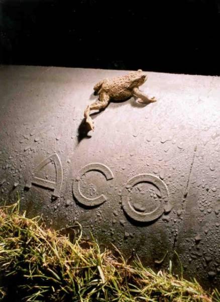 ACO Wildlife