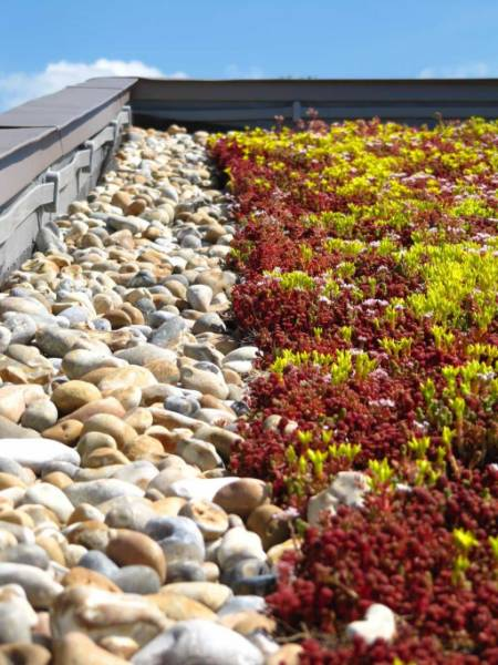 Eco green roof supplied to primary school