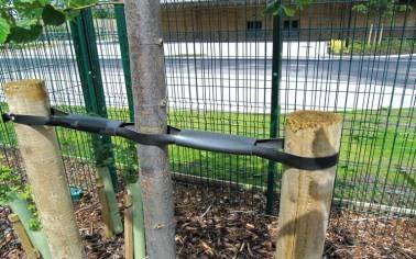 Tree Tie Systems