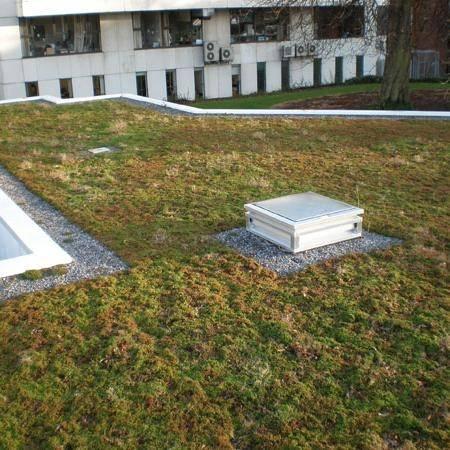 Extensive Green Roof Growing Media