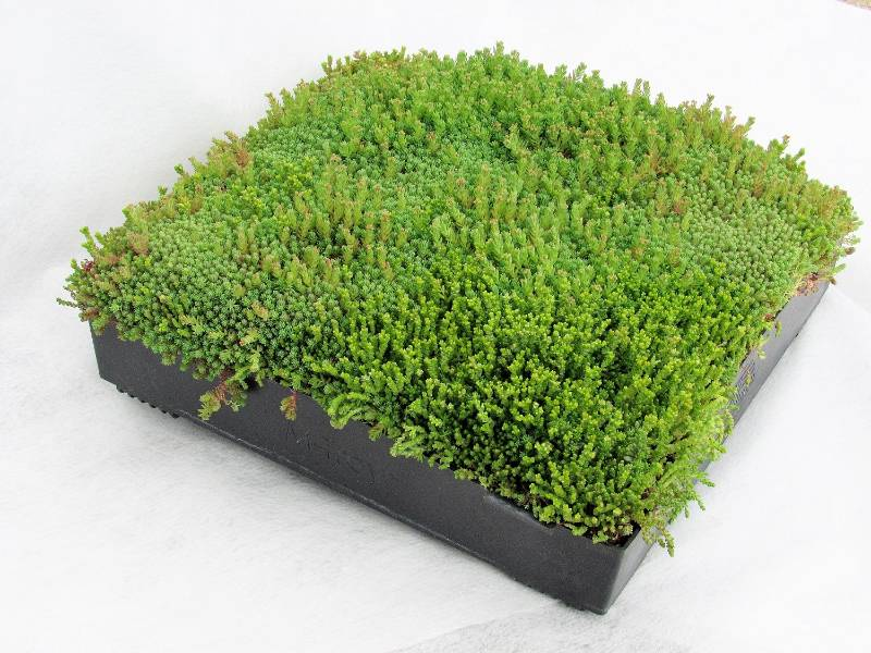 M-Tray® Sedum Green Roof Module
