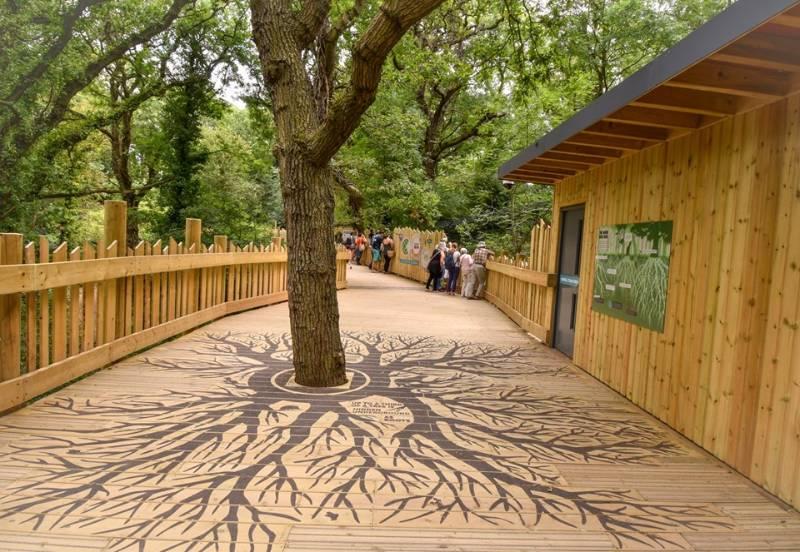 Non-Slip Decking | Bristol Zoo's Bear Wood Boardwalk