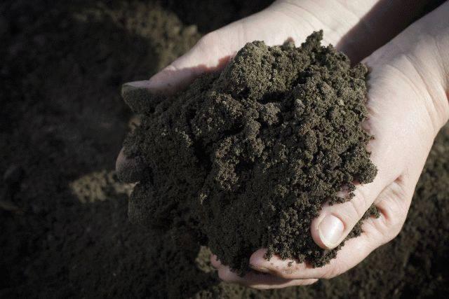 GT Green Tree Top Soil