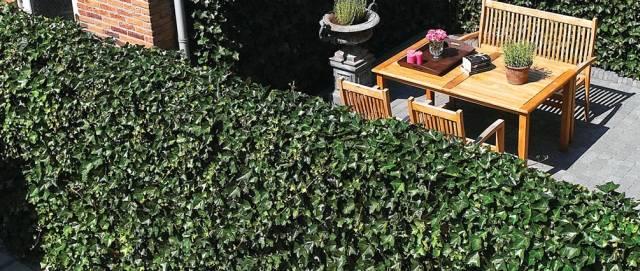Green Screen Living Wall