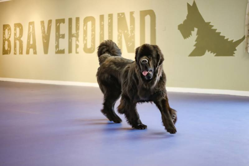 Bravehound Charity
