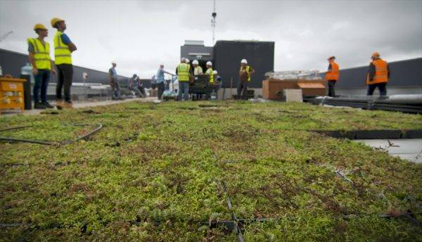 M-Tray®  Green Roof super fast installation