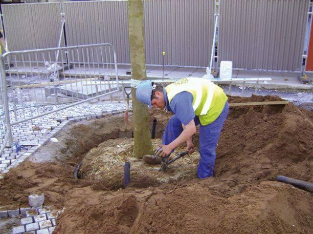 GT Amenity Tree Soil