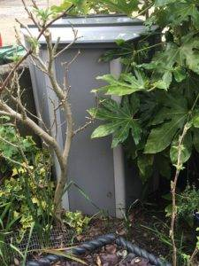 Going Green – Thinking Outside The (Composting) Box