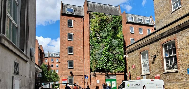 Orchard Lisle Living Wall for Team London Bridge